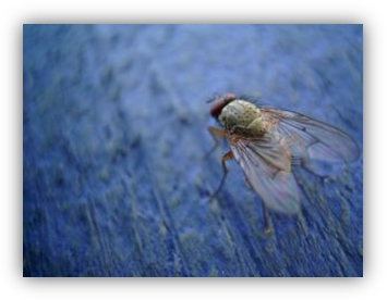 fly_on_the_wall_